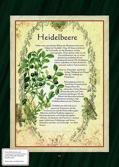 Heidelbeere