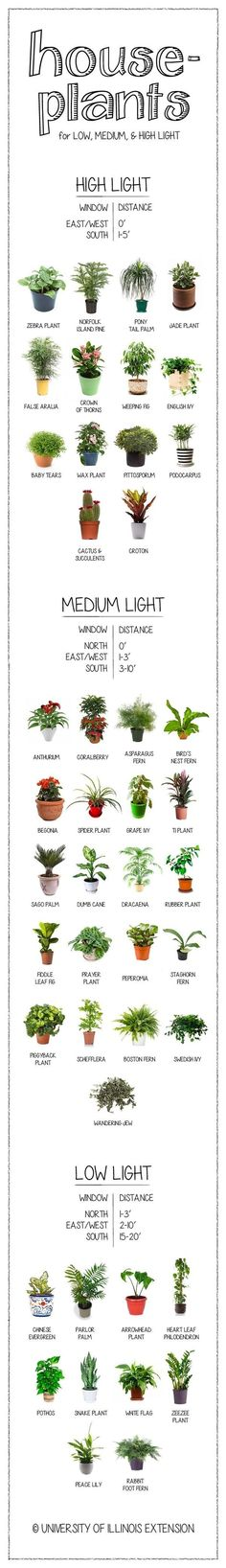 How much light does your houseplant need? Find out on this handy chart. | 23 Diagrams That Make Gardening So Much Easier