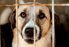 SOS ROMANIA | Four Paws. Give the stray dogs a chance to live! Call on Prime Minister Victor Ponta to quash the law which allows the mass killing of stray dogs!  SIGN AND SHARE!!!!!!