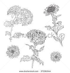 Elegant decorative chrysanthemum flowers set, design elements. Floral branches. Floral decorations for vintage wedding invitations, greeting cards, banners.