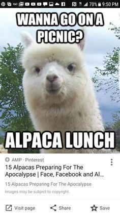 alpaca meme.html