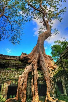 Ta Prohm Temple ruins in Angkor, Cambodia.