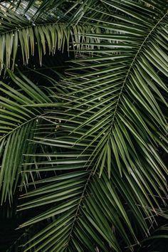 Leaf Background, Background Patterns, Nature Verte, Plant Wallpaper, Instagram Background, Palm Plant, Leaf Art, Tropical Leaves, Tropical Landscaping