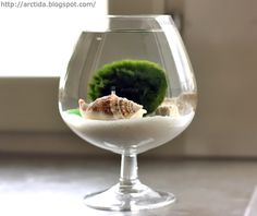 Marimo moss ball mini aquarium with sea treasures