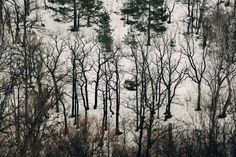 Buy winter tale, Color photograph by Artem Korenuk on Artfinder. Discover thousands of other original paintings, prints, sculptures and photography from independent artists.