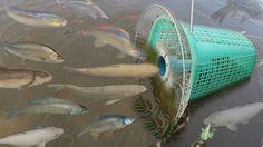Creative Girl Make Fish Trap Using PVC - Fan Guard - Basket To Catch A ...