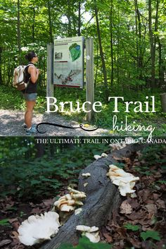 Hiking the Bruce Trail in Ontario, Canada. I've done sections, but it would be so cool to do it as a thru hike. Thru Hiking, Hiking Tips, Camping And Hiking, Backpacking, Ontario Travel, Destinations, Destination Voyage, Best Hikes, Hiking Equipment
