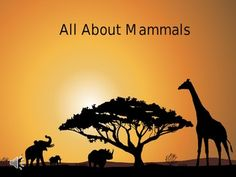 Created by The Teachers' Shoppe Fun and interactive PowerPoint Presentation that teaches about mammals. Sure to keep your student's attention with animal sounds, bells and cheers. Awesome graphics and animations with images of real animals.  Interactive quiz at the end of the presentation.