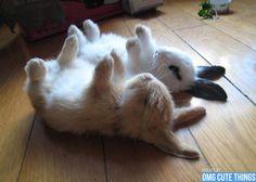 baby-bunnies-omg-cute-things-082112-08.jpg 600×429 pixels