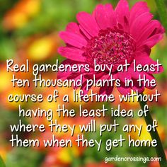 Real Gardeners buy at least tem thousand plants in a course of a lifetime without having the least idea of where they will put any of them when they get home