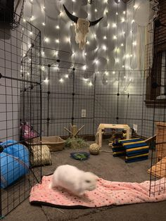 When youre about to take the cutest photo ever of your bun with arugula hanging . Indoor Rabbit House, Indoor Rabbit Cage, House Rabbit, Rabbit Hutch Indoor, Diy Bunny Cage, Bunny Cages, Rabbit Cages, Rabbit Cage Diy, Animal Room