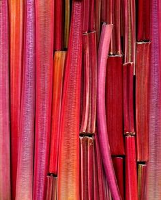 Rhubarb up close and personal
