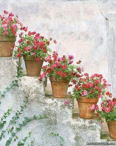 Me encanta !!!!  muy típico en haciendas decorando escaleras con Geraneos rojos