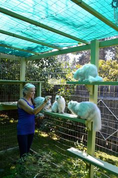 Cat patio remodeling ideas: Shading, aging in place ramps and stuff just for fun Diy Cat Enclosure, Outdoor Cat Enclosure, Patio Enclosures, Reptile Enclosure, Munchkin Cat Scottish Fold, Cat Castle, Cat Towers, Aging In Place, Cat Condo