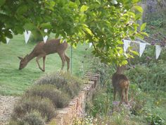 Wedding day deer Ice Houses, New Forest, Over The Years, Acre, Giraffe, Woodland, Survival, Gardens, Wedding