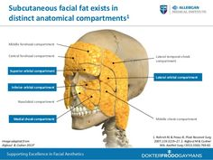 deep fat pads of the face - Google Search