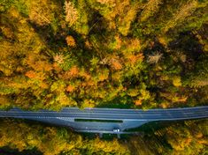 Asphalt road trough forest in fall, top down aerial from above. Asphalt Road, Drone Photography, Slovenia, Outdoor Furniture, Outdoor Decor, Park, Top, Image, Parks