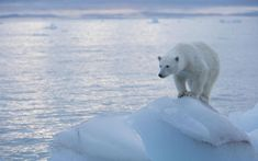"""New data shows that the """"vanishing"""" of polar ice is not the result of runaway   global warming"""