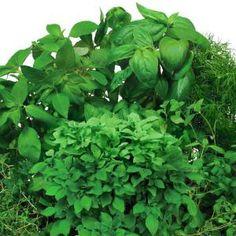 AeroGarden Gourmet Herb Universal Seed Pod Kit-800500-0208 at The Home Depot