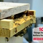 10 Things To Know Before You Start Beekeeping