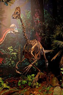 Chirostenotes (/ˌkaɪərɵˈstɛnɵtiːz/ ky-ro-sten-ə-teez; named from Greek 'narrow-handed') is a genus of oviraptorosaurian dinosaur from the late Cretaceous (about 75 million years ago) of Alberta, Canada. The type species is Chirostenotes pergracilis. Some researchers recognize a second species, C. elegans.
