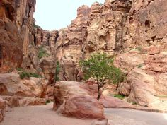 city of petra | The Ancient City of Petra by Mansour Mouasher/0230 Siq View