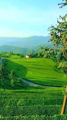 Beautiful Morning, Life Is Beautiful, Beautiful Gardens, Beautiful Places, Beautiful Nature Pictures, Beautiful Nature Wallpaper, Amazing Nature, Nature Gif, Nature Scenes