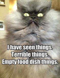 I have seen things. Terrible things. Empty food dish things.