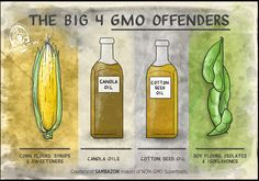 The four GMO offenders: 1) Corn flours, syrups & sweeteners; 2) Canola oil, 3) Cotton seed oil and 4) Soy flours, isolates & isoflavones. Courtesy of Sambazon