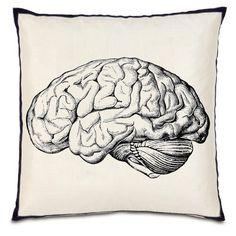 Human Brain Anatomy Skull Medical