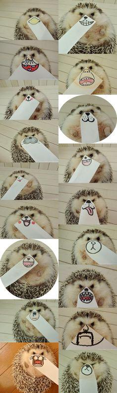 Hedgehog faces