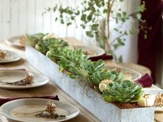 Succulent and tiny gray pumpkin fall centerpiece! Great for a rustic and earthy wedding too - Galvanized Trough Planter / Fall Décor at Terrain Galvanized Trough, Metal Trough, Trough Planters, Metal Planters, Galvanized Steel, Succulent Planters, Steel Planter, Faux Succulents, Succulent Centerpieces