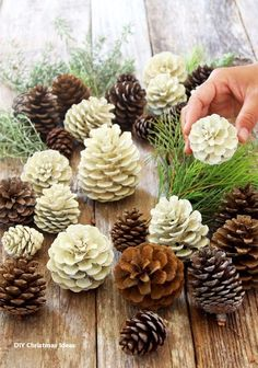 "Easiest 5 Minute 'Bleached Pinecones' {without Bleach!} Make beautiful ""bleached pinecones"" in 5 minutes without bleach! Non-toxic & easy DIY pine cone craft, perfect for fall, winter, Thanksgiving & Christmas decorations! - A Piece of Rainbow Diy Gifts For Christmas, Pine Cone Decorations, Homemade Christmas Decorations, Simple Christmas, Thanksgiving Decorations, Christmas Christmas, Primitive Christmas, Country Christmas, Holiday Decorations"