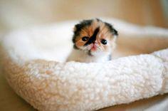 Super Cute Animal | Super cute animals pictures 2