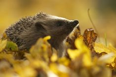 British Wildlife Photography Awards Showcase Island's Amazing Biodiversity