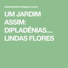 UM JARDIM ASSIM: DIPLADÊNIAS.... LINDAS FLORES