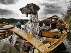 Brika a 3-year-old female German Shorthaired Pointer was a fun companion in the drift boat. At times she was overly critical of my fly casting technique but I blame that on bad company.