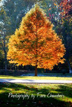 Autumn in West Frankfort, Illinois