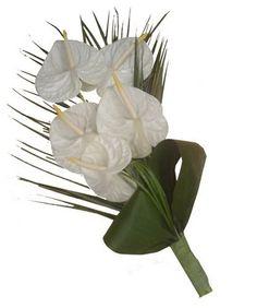 photo ramos-novia-anturios.jpg