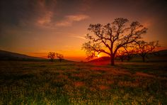 Fiddleneck field in Arvin by Angela Chong on 500px