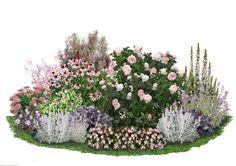 Wie die Kreation eines italienischen Zuckerbäckers wirkt diese Kollektion in zarten Pastellfarben. Die beliebte Englische Rose 'Heritage' wird von duftigen Blütenschleiern in weiß-rosa Tönen umrahmt. Purpurnes und silbernes Laub...