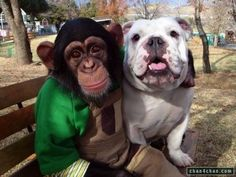 Love primates with their dog friends