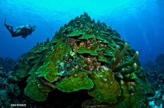 Curacao mushroom forest ... a true wonderland!