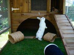 Giant Rabbit Hutch - Chicken Coop