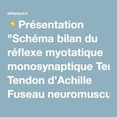 """⚡Présentation """"Schéma bilan du réflexe myotatique monosynaptique Tendon d'Achille Fuseau neuromusculaire Fibres musculaires contractiles Triceps sural Neurone sensitif."""""""