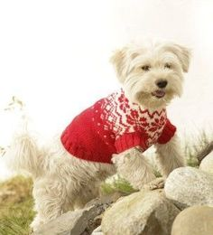 Jersey para mascota o perro a crochet