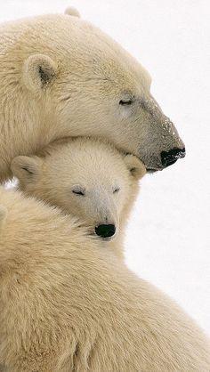bear white cub family 1987 por vadaka1986 en Flickr