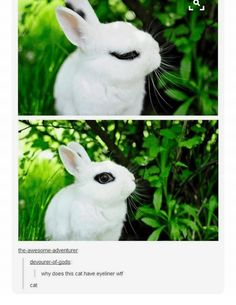 On this bunny's look: