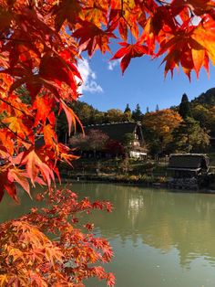 tour leader Steve caught this stunning snap last year in Takayama during Japan's spectacular autumn leaves season on our Japan Unmasked small group tour Small Group Tours, Small Groups, Takayama Japan, Environment Design, Alps, Autumn Leaves, Folk, Destinations, River