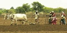 Village Photography, Village Photos, Prime Minister, Beach Photos, Debt, Farmers, Agriculture, Forgiveness, India